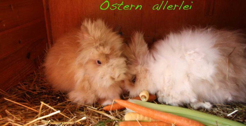unsere Teddy-Osterhasen